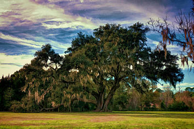 Photograph - Ancient Live Oak by Lewis Mann