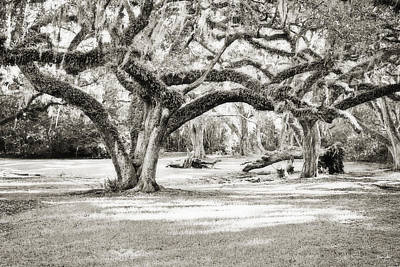 Avery Island Photograph - Ancient Oaks by Scott Pellegrin