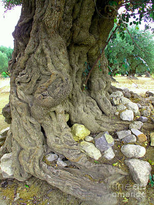Greek Photograph - Ancient Olive Tree Trunk In Greece by Cimorene Photography
