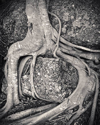 Exposed Photograph - Ancient Roots by Adam Romanowicz