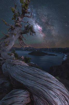 Ancient Roots Of Crater Lake Art Print