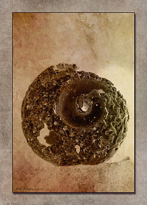 Photograph - Ancient Shell by WB Johnston