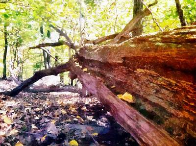 Digital Art - Ancient Timber by Derek Gedney