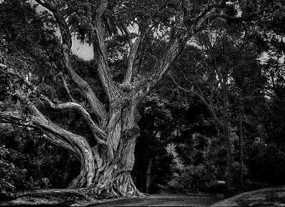 Photograph - Ancient Tree by Eduardo Tavares