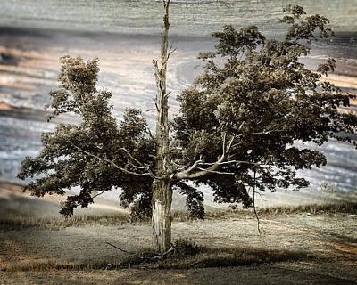 Photograph - Ancient Tree by Scott Hovind