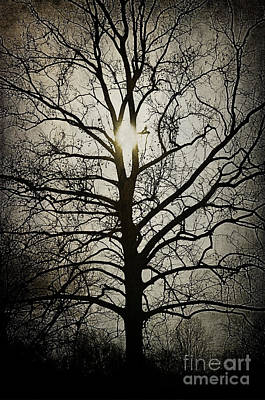 Photograph - Ancient Tree by Terry Rowe
