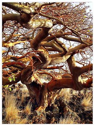 Ancient Wiliwili Tree Art Print by Stephen Green