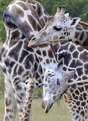 Photograph - And Baby Makes Three by Lori Tambakis