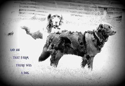 Olympic Sports - And On That Farm There Was A Dog Or Actuallu Two  by Hilde Widerberg