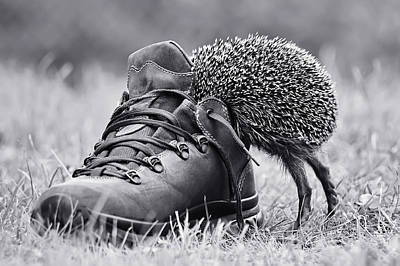 Hedgehog Wall Art - Photograph - And Suddenly It's My Size? by Elena Solovieva
