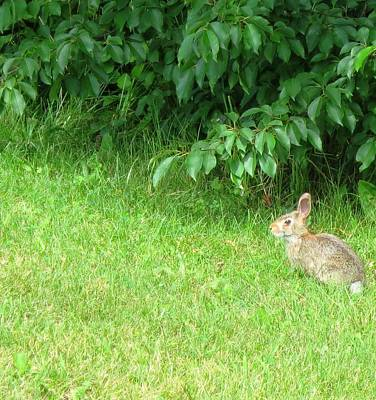 Bunny Photograph - And Yet So Far Away by Jennifer Fliegel