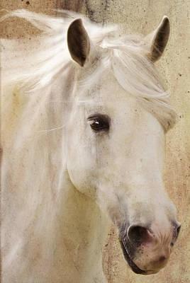 Photograph - Andalusian Dreamer by Melinda Hughes-Berland