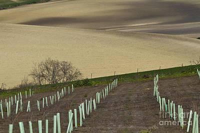 Heiko Koehrerwagner Photograph - Andalusian Farmland Series-4 by Heiko Koehrer-Wagner