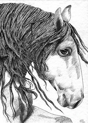 Drawing - Andalusian Horse by Kate Black