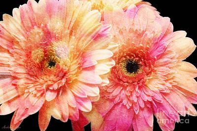 Photograph - Andee Design Gerber Daisies 2 by Andee Design