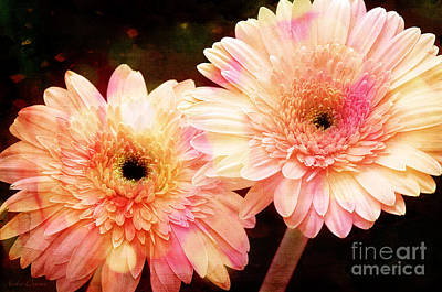 Photograph - Andee Design Gerber Daisies 3 by Andee Design