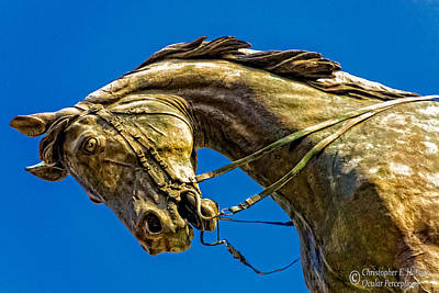 Photograph - Andrew Jackson's Horse  by Christopher Holmes