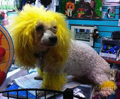 Photograph - Andrew The Poodle by Saundra Myles