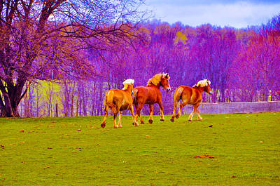 Photograph - Andy's Horses by BandC  Photography