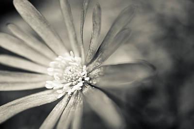 Anemone Photograph - Anemone Blanda In Black And White by Priya Ghose