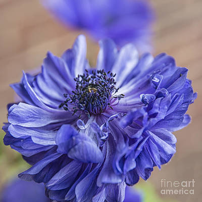 Anenome Photograph - Anemone Blues II by Terry Rowe