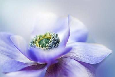 Petals Photograph - Anemone De Caen by Jacky Parker