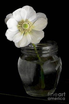 Water Jars Photograph - Anemone by Elena Nosyreva