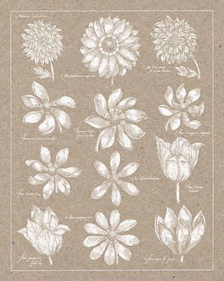 Anemone Plate II Art Print by Wild Apple Portfolio
