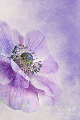 Filigree Photograph - Anemone by Priska Wettstein