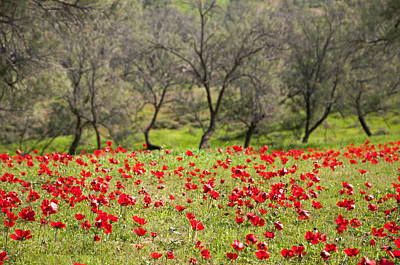 Photograph - At Ruchama Forest Israel by Dubi Roman