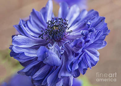 Anemone Blues I Art Print by Terry Rowe