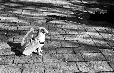 Dogs In Art Photograph - Angel Dog In Venice by John Rizzuto