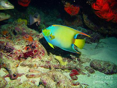 Reptiles Royalty-Free and Rights-Managed Images - Angel Fish by Carey Chen