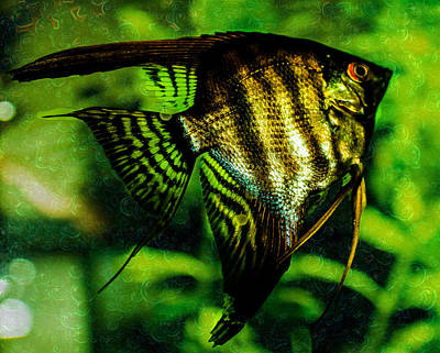 Photograph - Angel Fish by Lisa Brandel