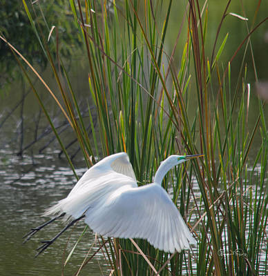 Photograph - Angel In The Marsh by Susan Molnar