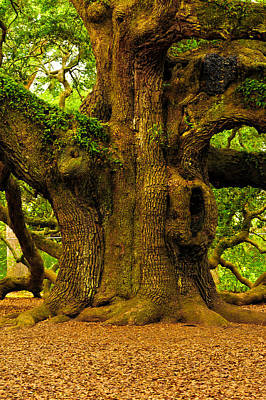 Angel Oak Photograph - Angel Live Oak Trunk by Louis Dallara
