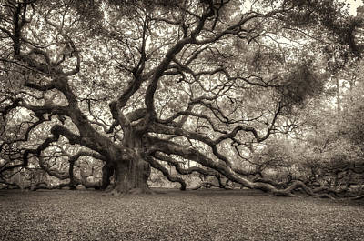 Photograph - Angel Oak - Sepia by Joye Ardyn Durham