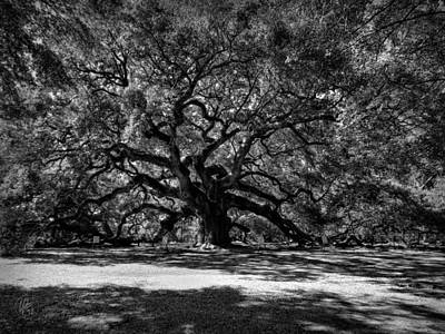 Photograph - Angel Oak 001 Bw by Lance Vaughn