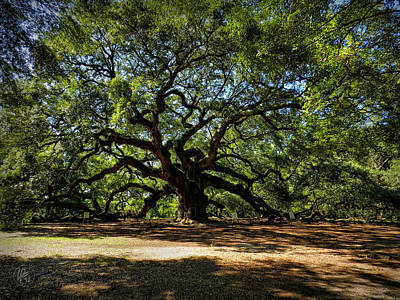 Angel Oak Photograph - Angel Oak 001 by Lance Vaughn