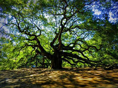 Angel Oak Photograph - Angel Oak 003 by Lance Vaughn