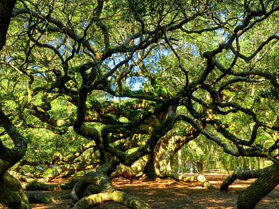 Angel Oak 006 Art Print by Lance Vaughn