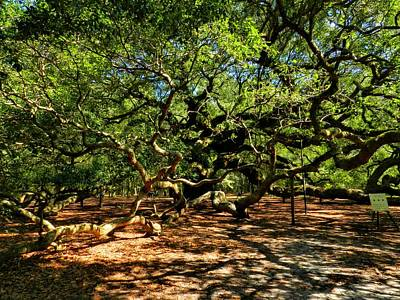 Angel Oak Photograph - Angel Oak 007 by Lance Vaughn