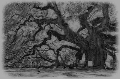 Photograph - Angel Oak B And W by E Karl Braun