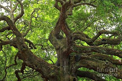 Photograph - Angel Oak Branches by Adam Jewell