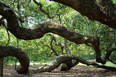 Terry Oneill - Angel Oak Branches by Robbie Bellamy