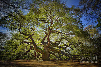 Angel Oak Art Print by Carrie Cranwill