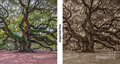 Photograph - Angel Oak Diptych by Dale Powell