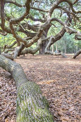 Angel Oak Tree Photograph - Angel Oak by Dustin K Ryan