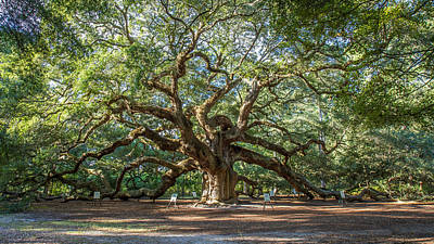 Photograph - Angel Oak  by Pierre Leclerc Photography