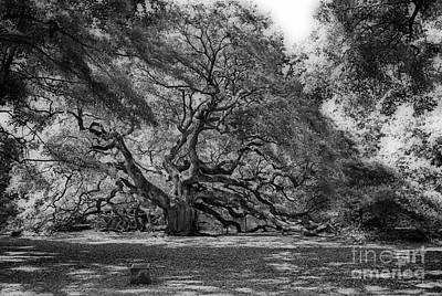 Antique Maps - Angel Oak  by Skip Willits